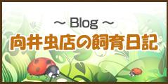 ブログ 向井虫店の飼育日記